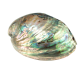 Boucle d'oreille en nacre abalone Grand ovale