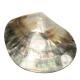 Boucle d'oreille en nacre de Polynésie - Losange motif Maori gravé